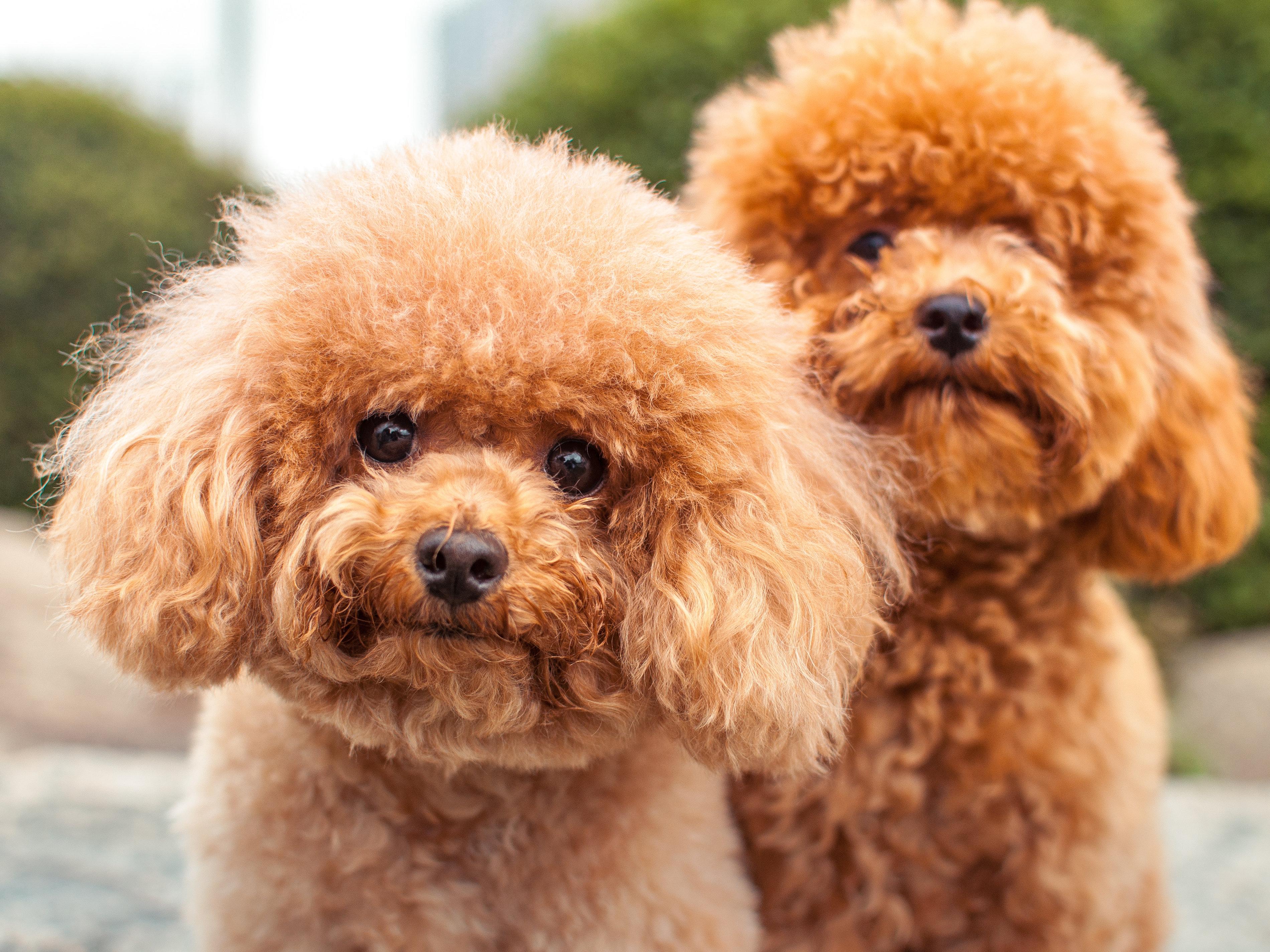 Ganaraskan Dog Pictures