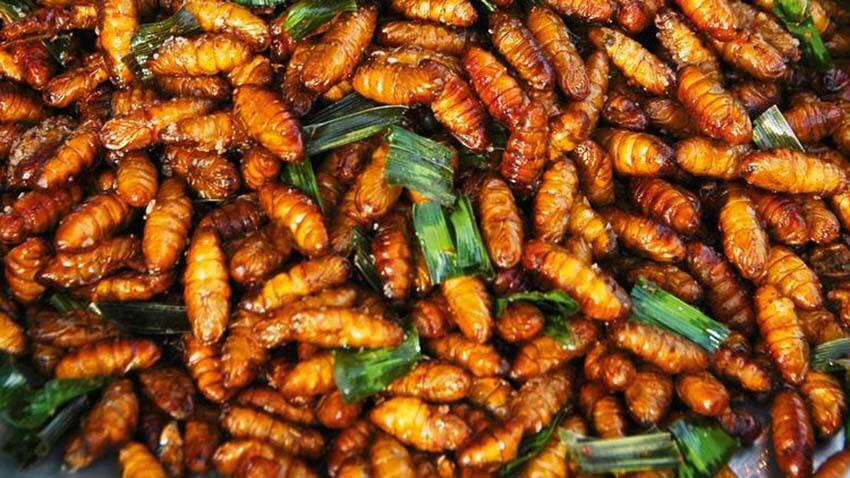 Druga obetavna rešitev so žuželke